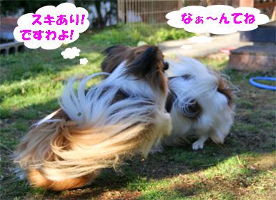 yuzukota080222-4.jpg