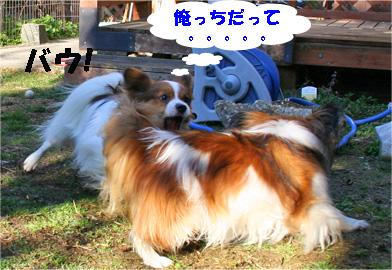 yuzukota080222-5.jpg