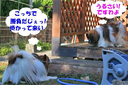 yuzukota080222-6.jpg
