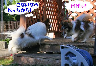 yuzukota080222-7.jpg