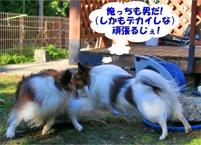 yuzukota080222-8.jpg