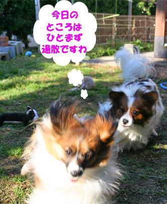 yuzukota080222-9.jpg