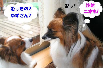 yuzukota080227-1.jpg