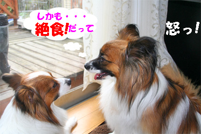 yuzukota080227-2.jpg