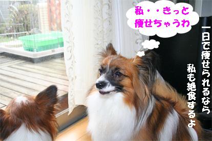 yuzukota080227-3.jpg