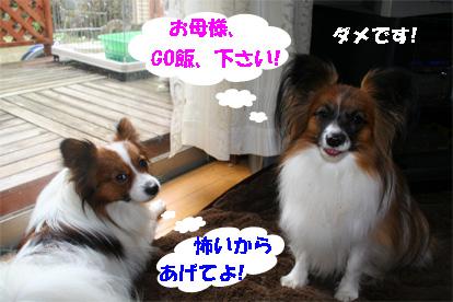 yuzukota080227-4.jpg