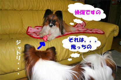 yuzukota080229-1.jpg
