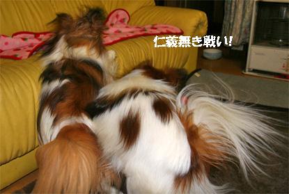 yuzukota080229-3.jpg
