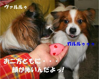 yuzukota080229-4.jpg