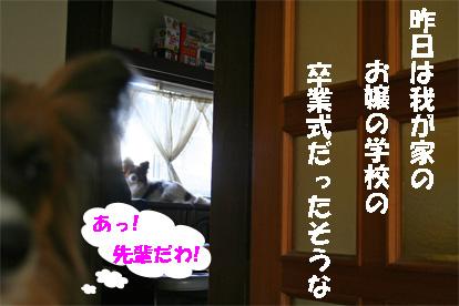 yuzukota080304-1.jpg