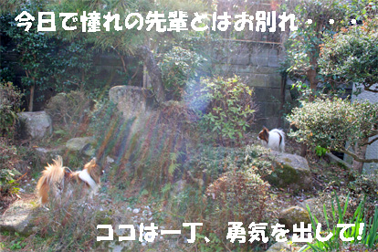 yuzukota080304-2.jpg