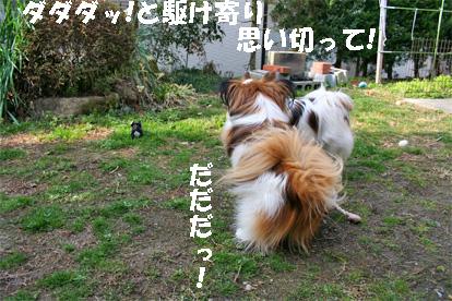 yuzukota080304-3.jpg