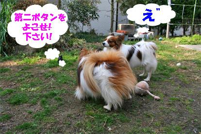 yuzukota080304-4.jpg