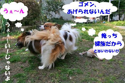 yuzukota080304-5.jpg