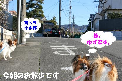 yuzukota080305-1.jpg