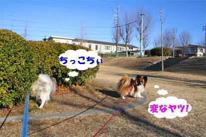 yuzukota080305-3.jpg