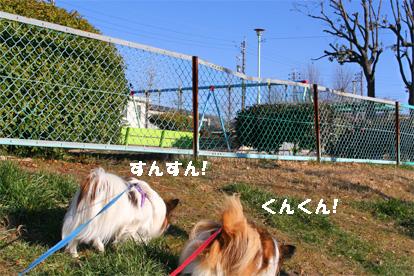 yuzukota080305-4.jpg