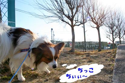 yuzukota080305-6.jpg