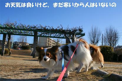 yuzukota080306-1.jpg