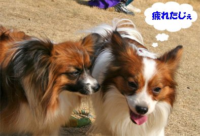 yuzukota080312-1_20080313140222.jpg