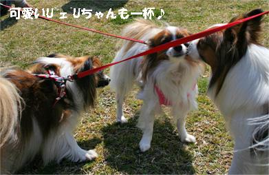 yuzukota080317-1.jpg