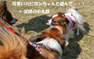 yuzukota080317-2.jpg