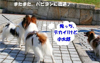 yuzukota080317-3.jpg