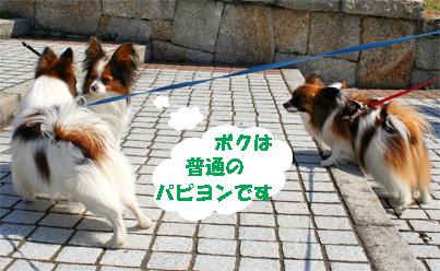 yuzukota080317-4.jpg