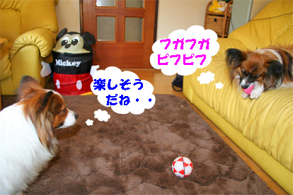 yuzukota080328-1.jpg