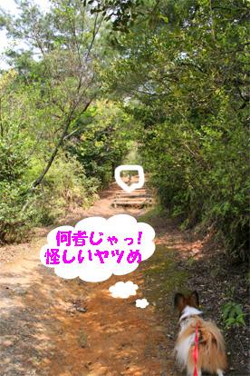 yuzukota080415-2.jpg