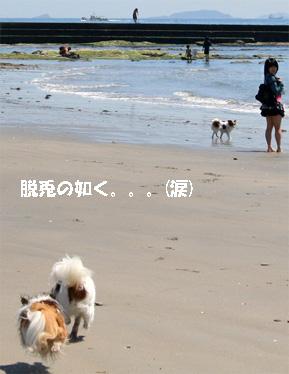 yuzukota080424-1.jpg