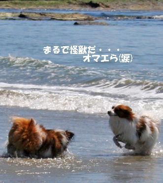 yuzukota080424-3.jpg
