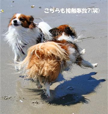 yuzukota080424-4.jpg