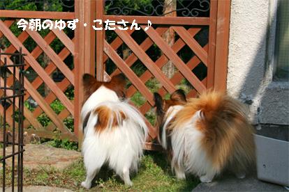 yuzukota080526-1.jpg
