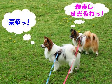 yuzukota080529-1.jpg