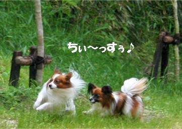 yuzukota080609-1.jpg