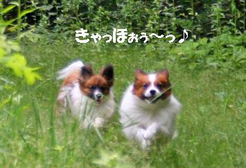 yuzukota080609-2.jpg
