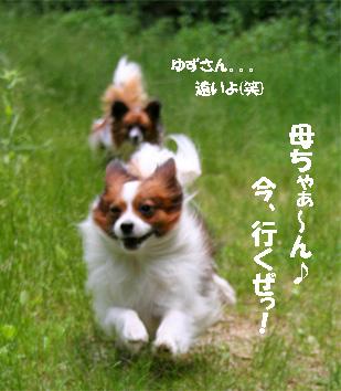 yuzukota080609-3.jpg
