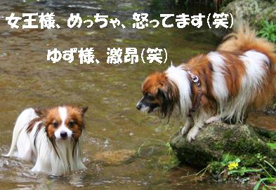yuzukota080612-1.jpg