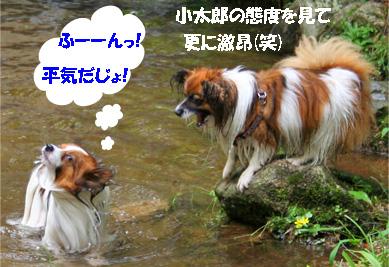 yuzukota080612-2.jpg