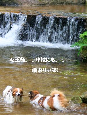 yuzukota080612-3.jpg