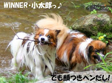yuzukota080612-5.jpg