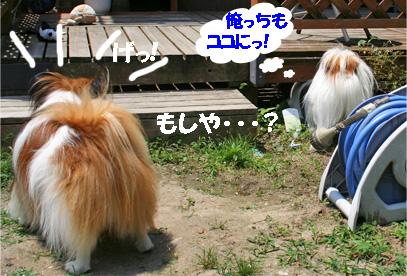 yuzukota080617-1.jpg