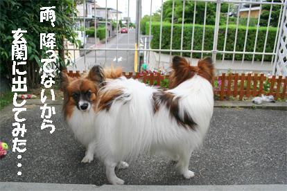 yuzukota080619-1.jpg