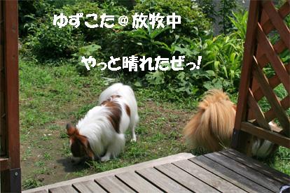 yuzukota080630-1.jpg
