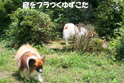 yuzukota080630-2.jpg