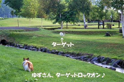 yuzukota080819-2.jpg