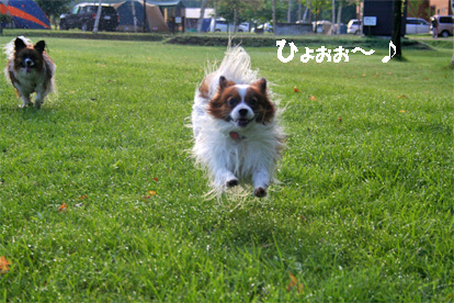 yuzukota080819-4.jpg
