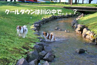 yuzukota080819-5.jpg