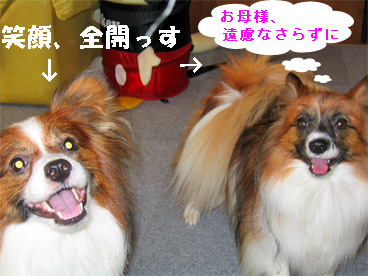 yuzukota080912-2.jpg